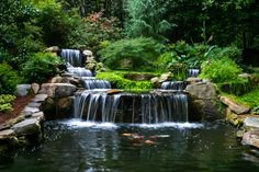 Garden With Large Waterfall : Interesting Outdoor Garden Frogs Backyard Water Feature, Ponds Backyard, Koi Ponds, Plantas Indoor, Garden Frogs, Garden Pond, Carpe Koi, Garden Waterfall, Natural Pond