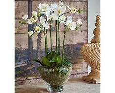 You could probably create this gorgeous phalaenopsis centrepiece yourself - but it would take a lot of time, patience and effort. On the other hand, you could take