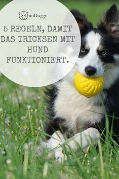 || #Hund || Ideen || #Hunde || Tipps || Tricks || Ideen || Liebe || Welpen || Bilder || #Hundetricks