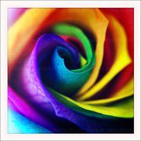 Colorful Rainbow Flower Rose 5x5 Retro Square by artstudio54