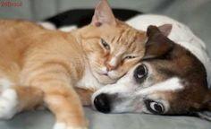 Animais domésticos poderão ter seguro médico obrigatório