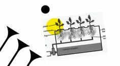 http://www.hydroponicsupplies.net.au/hydroponic-systems Hydro supplies and hydroponic systems