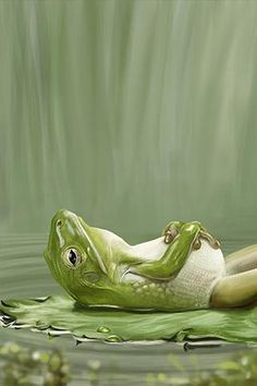 napping is not a sin it is a pleasure. Frog Wallpaper, Nature Iphone Wallpaper, Eyes Wallpaper, Animals And Pets, Funny Animals, Cute Animals, Lazy Animals, Relaxing Photos, Frog And Toad