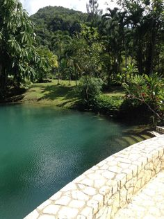 Entire home/flat in Roaring River Jamaica, Jamaica. Blue Hole Gardens is a complete experience of Jamaica . Situated in the heart of one of the oldest Rasta communities , surrounded by the ganja fi. Blue Hole, Rental Apartments, Beautiful Gardens, Jamaica, Perfect Place, River, Places, Outdoor Decor, Holiday