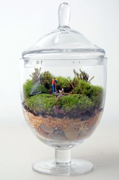 A romantic little landscape tucked into an elegant miniature apothecary jar terrarium. Planted inside is fresh green moss on a bed of river stones.