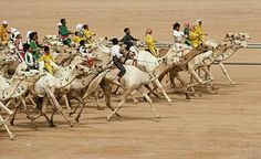 Photograph:Camel racing was a traditional sport of the Bedouin nomads of the Arabian deserts. Today Saudi Arabia holds modern camel races every week in the winter, and special annual races attract thousands of spectators.