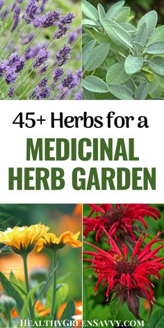 Thinking of starting a medicinal herb garden or adding medicinal plants to your existing garden? Check out this info on selecting medicinal plants, with more than 45 to choose from. #medicinalplants #herbalism #garden #herbgarden #plantmedicine Growing Herbs At Home, Herbs For Health, Herbs Garden, Grow Your Own Food, Natural Home Remedies, Medicinal Plants, Herbal Medicine, Apothecary, Natural Health