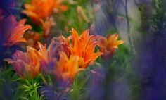 Surrounded by Violet! by Aziz Nasuti on Plants, Painting, Painting Art, Paintings, Plant, Painted Canvas, Drawings, Planets