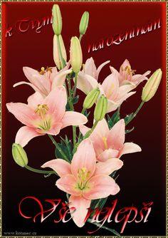 Přání k narozeninám 010 animace Cherry Blossom Art, Botanical Art, Orchids, Happy, Flowers, Plants, Anna, Craft Flowers, Ser Feliz