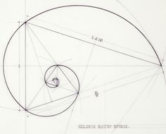 nyaaozawa:      Gallery of This Architect Fuses Art and Science by Hand Illustrating the Golden Ratio - 5