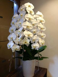Wow...Orchid plants