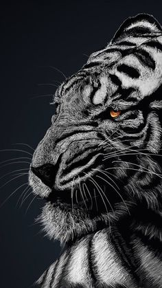 50 Most Popular Tiger Wallpaper Mobile - Tattoo Designs Lion Wallpaper Iphone, Wild Animal Wallpaper, Iphone Wallpapers, Cellphone Wallpaper, Big Cats, Cool Cats, Animals Beautiful, Cute Animals, Tiger Artwork