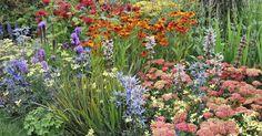 Die richtige Pflanzenauswahl sorgt für reichlich Pollen und Nektar im heimischen Garten. Das freut Insekten und Gärtner gleichermaßen. Mit diesem Pflanzplan wird das Beet zu jeder Jahreszeit für Bienen, Hummeln und Co. attraktiv.