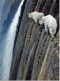 Sheer Drop, 1980 Robert Bateman (Canada, b. 1930) Oil on Board, 48 x 36 inches JKM Collection®, National Museum of Wildlife Art