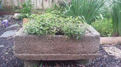 20140514 063054 resized Welcome to The Hypertufa Gardener