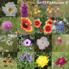 I decided to do the research for myself (there were a couple flower names out of the above images I didn't know, either). I just couldn't wait any longer for the answers. It was bugging me. So I tr...