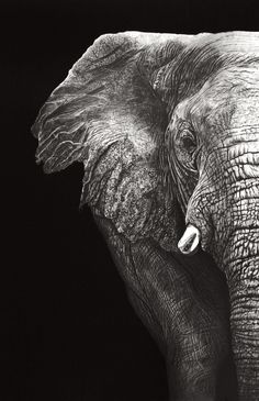 Elephant (Pencil) by Paul-Shanghai Image Elephant, Elephant Love, Elephant Art, African Elephant, Elephant Photography, Wildlife Photography, Animal Photography, Elephant Pictures, Elephants Photos