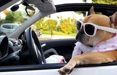 """They see me rollin', they barkin'..."" #richdogsofig"