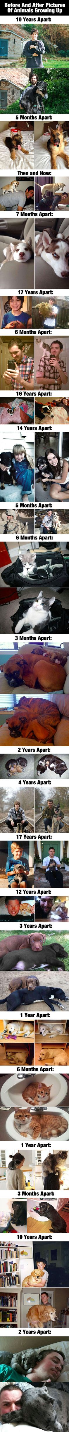 Before and after photos of animals growing up.