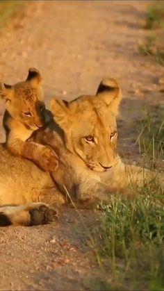 Nature Gif, Cute Cats And Kittens, Animals Beautiful, Wildlife, Guns, Animals, Storage, Animales, Cutest Animals