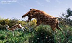 Poebrotherium - Google Search