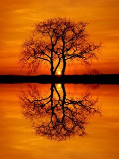 lovely solitude...I love photos of sunrises and sunsets...this one is exceptionally gorgeous