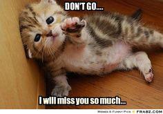 No te vayas ! te voy a extrañar mucho!!