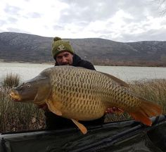 Carp Couture Croatia Member  Zlatan Celo Ganic  News from Lake Tribalj in CroatiaZlatan had this lovely big common on his last sessionbig well done mate !  #Shotgun #TeamCarpCouture #CarpCoutureClothing #TheCarpHub #ccc  For all the latest releases of clothing and tackle visit the webstore.  Www.thecarphub.co.uk  #ccc #carp #mirrorcarp  #carptalk #totalcarp #ukcarp  #carpfishing #hoody #snoody #joggers  #TeamCarpCouture #CarpCouture #baitsafebag  #carpfishing  #fishing #carpy  #thecarphub…