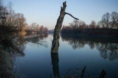 Masio in AL un tronco ormai secco si specchia sul fiume immoto.