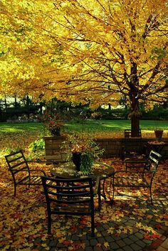 Autumn table under the tree. I can almost smell the sweet fall breeze and hear the leaves blowing by on the ground. Foto Nature, Autumn Table, Autumn Scenes, Autumn Park, Seasons Of The Year, Jolie Photo, Vintage Roses, Mellow Yellow, Fall Season