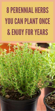 Garden Shrubs, Veg Garden, Garden Seeds, Edible Garden, Vegetable Gardening, Garden Fun, Garden Path, Garden Landscaping, Growing Herbs