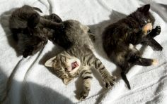 Kitten Academy Live Stream..Please tune in to a LivE Steaming of baby kittens and their momma's. Also with other information that is available on their website. Reiki vibes~~