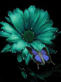 Discover & share this Adult Art GIF with everyone you know. GIPHY is how you search, share, discover, and create GIFs. Flowers Gif, Teal Flowers, Rare Flowers, Butterfly Flowers, Beautiful Butterflies, Amazing Flowers, My Flower, Pretty Flowers, Flower Art