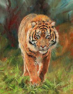 Amur Tiger Painting by David Stribbling