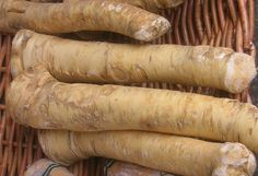 Homemade Horseradish Sauce Recipes, Other Uses for Fresh Horseradish Growing Horseradish, Homemade Horseradish, Creamy Horseradish Sauce, Horseradish Plant, Sinus Remedies, Home Remedies, Natural Remedies, Sauce Recipes, Wine Recipes