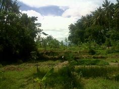 1 hektar Ubud akomodasi wisata