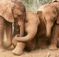 orphan elephants at DSWT