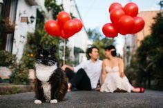 Pet Wedding Attire - How to Dress Pets for Wedding   Wedding Planning, Ideas & Etiquette   Bridal Guide Magazine