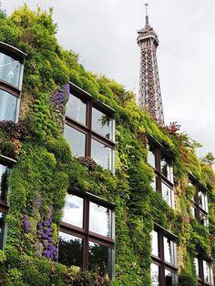Paris. Vertical gardening..