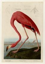 University of Pittsburgh Hosts Annual Audubon Day Nov. 22 | University of Pittsburgh News