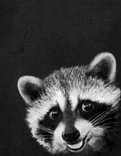 Raccoon Canvas Artwork by Laura Graves Raccoon Drawing, Raccoon Art, Baby Raccoon, Cute Raccoon, Racoon, Raccoon Tattoo, Canvas Artwork, Canvas Prints, Art Prints