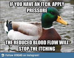 Actual Advice Mallard on itches.