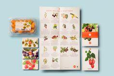 Ocati Branding & Illustrations