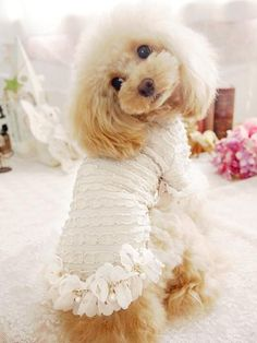 Fancy Luxury Dog Clothes Dogs In Clothes #DogsInClothes #poodle