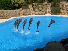 10 Reasons to Visit Tenerife - The Loro Parque...Read more on our blog here: http://www.sunmaster.co.uk/blog/10-reasons-visit-tenerife/ #reasons #visit #tenerife #travel #blog #travelblog #canaries #canary #islands #sunmaster #holidays