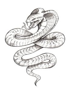Snake 2 By Zaphrozz Traditional Art Body Modification Tattoos Design 900x1140 Pixel