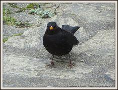 Oiseaux du jardin - Mars 2018 - Framboise à Pornic