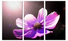 Drieluik canvas schilderij Zonnestralen op Paarse Bloem