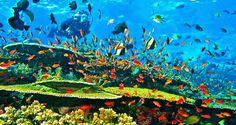 Sea flores , komodo national park ,  Boking seat tour indonesia  +6285730289940 Www.freedomtourindonesia.com