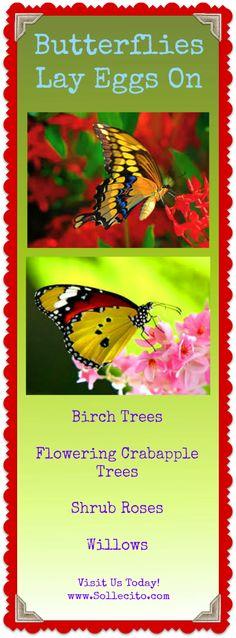 www.Sollecito.com Butterflies Lay Eggs On . #Butterflies #butterflyGardens #Flowers #LandscapingTips